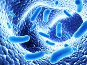 restless legs probiotics